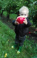 kijk-kleine-appel