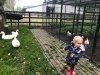 in-de-kinderboerderij