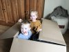 samen-in-een-doos-lol